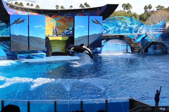 Shamu One Ocean Sea World Orlando