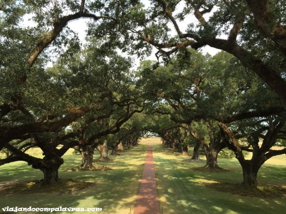 Carvalhos de Oak Alley Plantation