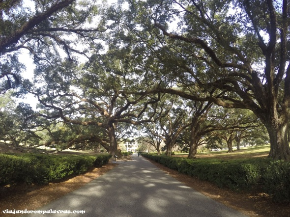 Área de Oak Alley Plantation